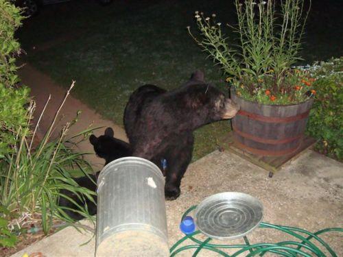 Bears (aug 11,09) 010