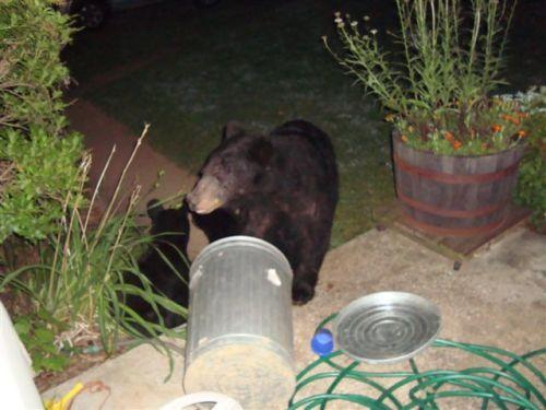 Bears (aug 11,09) 011