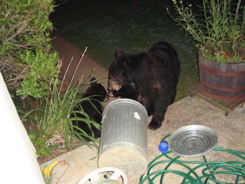 Bears (aug 11,09) 012